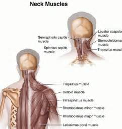 info on muscle spasms picture 9