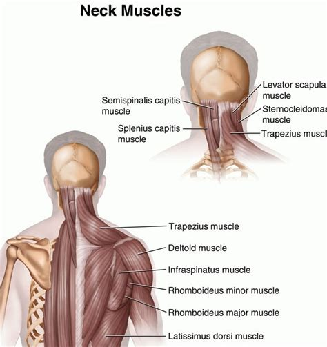 Causes of muscle spasms picture 6