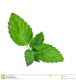 peppermint powder picture 7