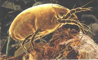 dust mites on skin picture 17