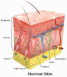 diseases of the skin picture 14