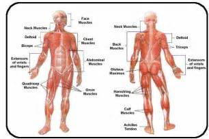 disease of the muscle picture 2