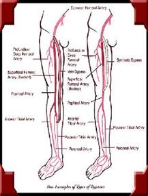 diagnosis of muscle pain in legs picture 14
