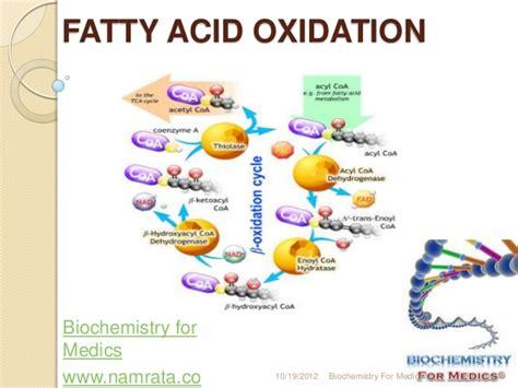 redox fat picture 3