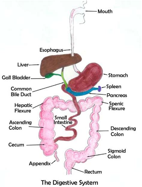 where to go to get colon cleansing in picture 4