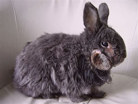 eye abscess in rabbit natural treatment picture 5