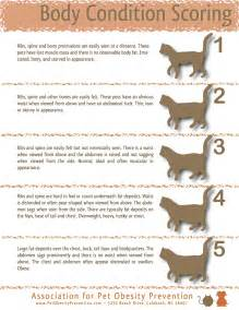 excessive hair loss and weight gain in cats picture 3