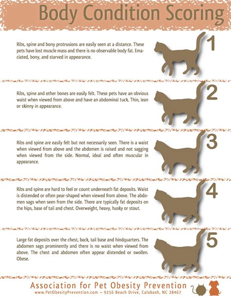 excessive hair loss and weight gain in cats picture 2