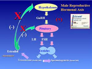 weight gain with testosterone therapy picture 14