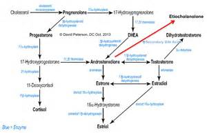 testosterone effects immune system picture 11