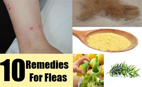 herbal remedy fleas picture 2