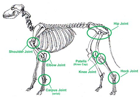 canine joint disease picture 9