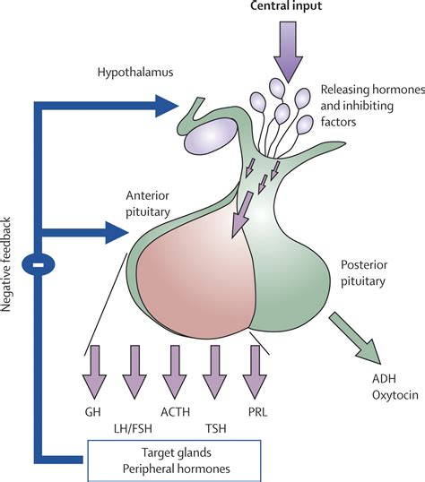 anterior pituitary hyperhormonotrophic syndrome symptoms picture 10