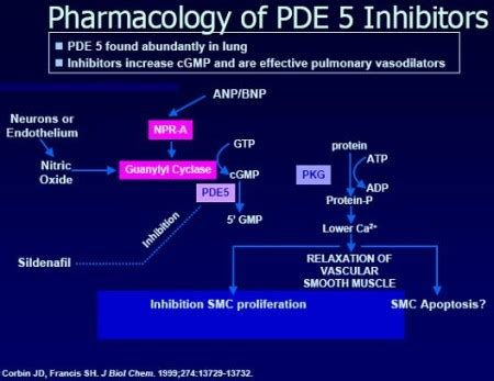 chinese herbs that are pde5 inhibitors picture 13