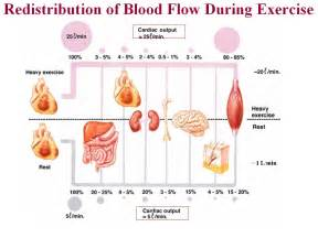 exercises for genital blood flow picture 1