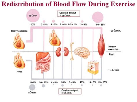 figure 8 of blood flow picture 13