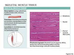 function of the cilary muscle picture 15