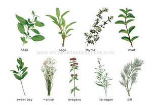 online glossary of herbal plants and their uses picture 1