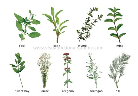 herbal recipes picture 6