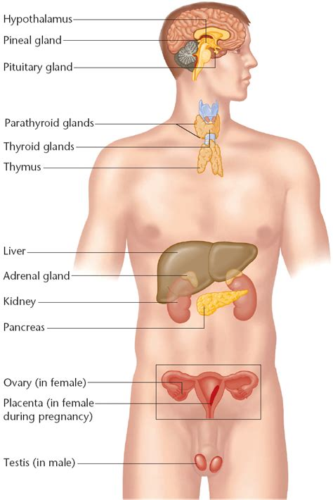 raw ovarian glandular effects on males picture 17