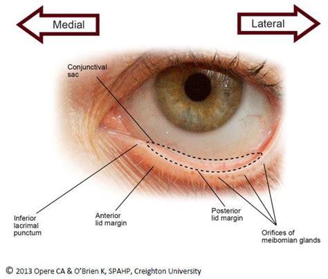 define: thyroid gland picture 13