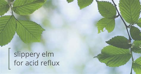 slippery elm acid reflux picture 2