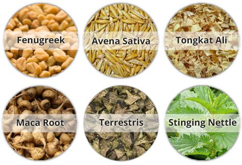 boost your testosterone with natural herbs minerals picture 1