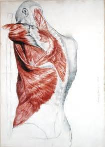 art muscles picture 1