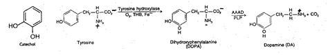 diet pills thyromine picture 11