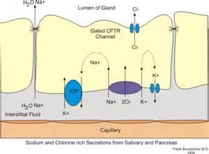 gastrointestinal secretions picture 5