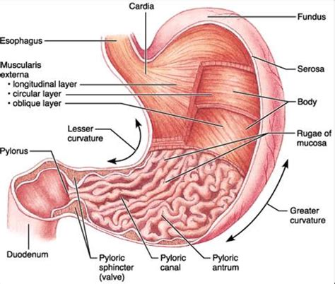 digestion review picture 6