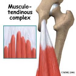 hamstring muscle injuries picture 17