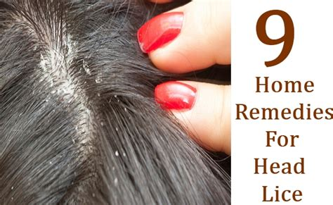 herbal treatments for lice picture 14