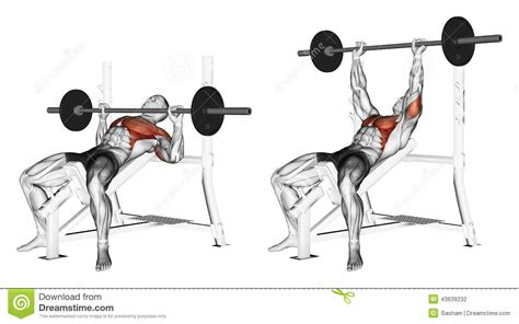 exercising muscle groups picture 10