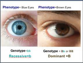 is skin color a heredity picture 14