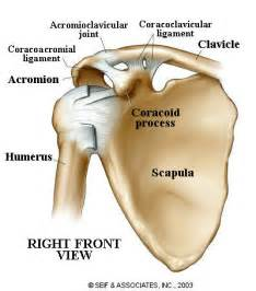 arthritis of the ac joint of the shoulder picture 18