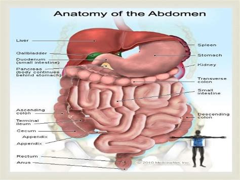 liver pain spasm picture 2