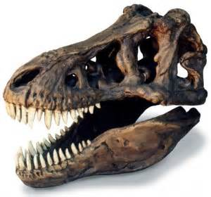 t rex teeth info picture 10