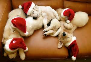 asleep at w christmas picture 1
