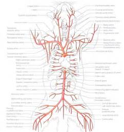 kelacore and blood flow picture 5