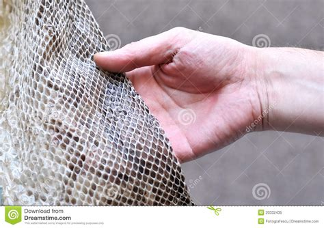 snake skin hands picture 5