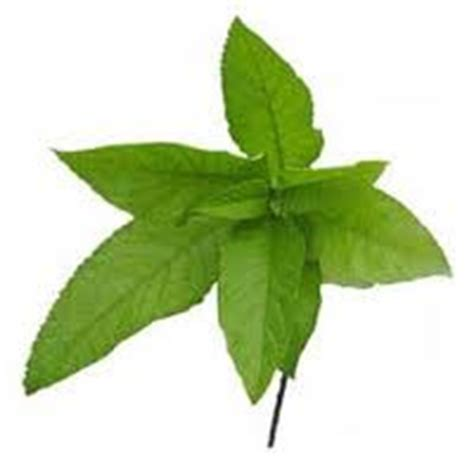 gamot sa buni herbal picture 10