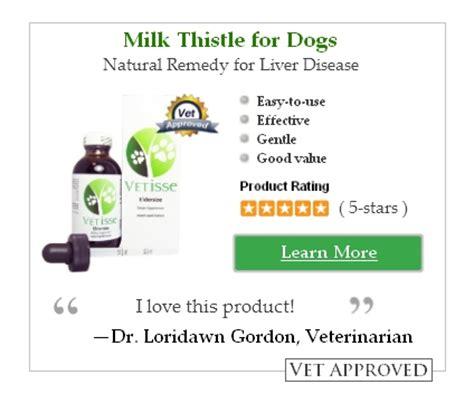 canine liver disease symptoms picture 15