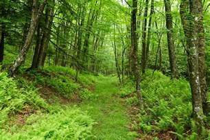 natural plants in virginia that have opiod effects picture 2