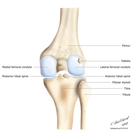 diagram of knee joint picture 3