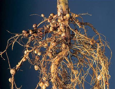 alfalfa fertilizer picture 13
