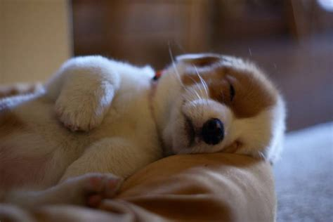 puppy sleeping through the night picture 2