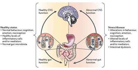 cognitive le cerbvas disease picture 9