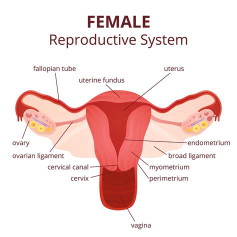 reproductive picture 2