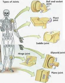 function of joints picture 3
